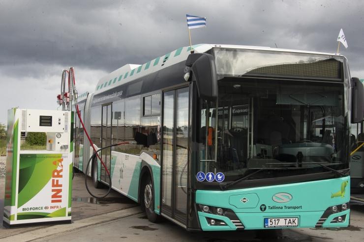 VIDEO! Järgmisel aastal tuleb linnaliiklusesse veel sada rohebussi
