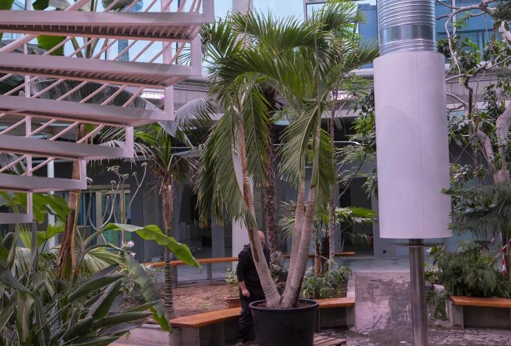 VIDEO JA FOTOD! Botaanikaia palmimajja jõudis hiigelsuur nääripalm